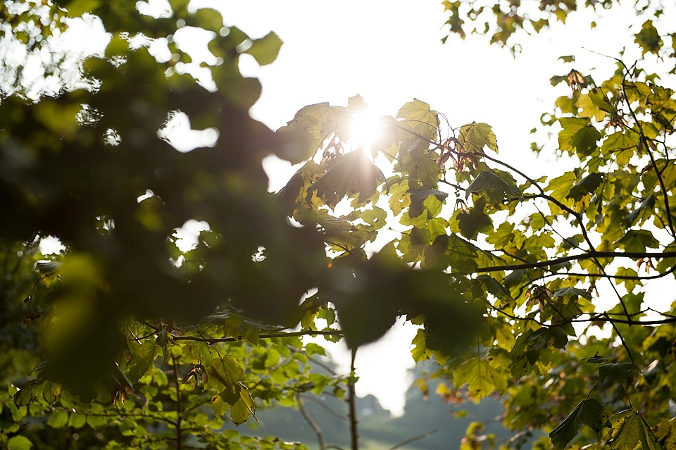 Light peeking through the trees - nature photography - English country garden wedding at the Walled Garden at Cowdray Sussex - natural wedding photographer © Fiona Kelly photography