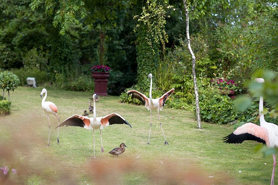 Flamingoes Kensington Roof Gardens