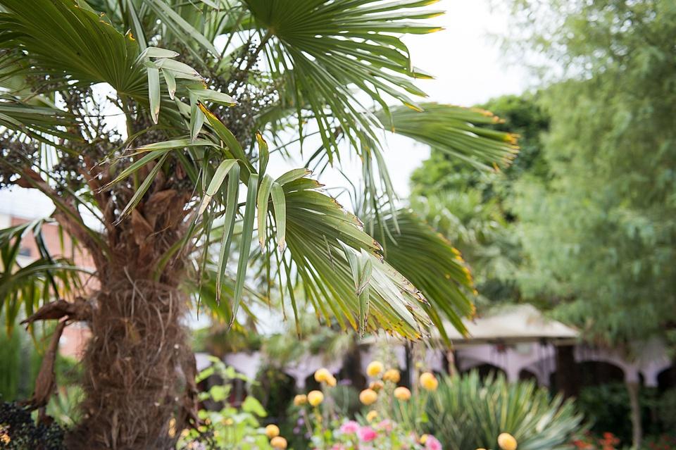 Palm trees Kensington Roof Gardens