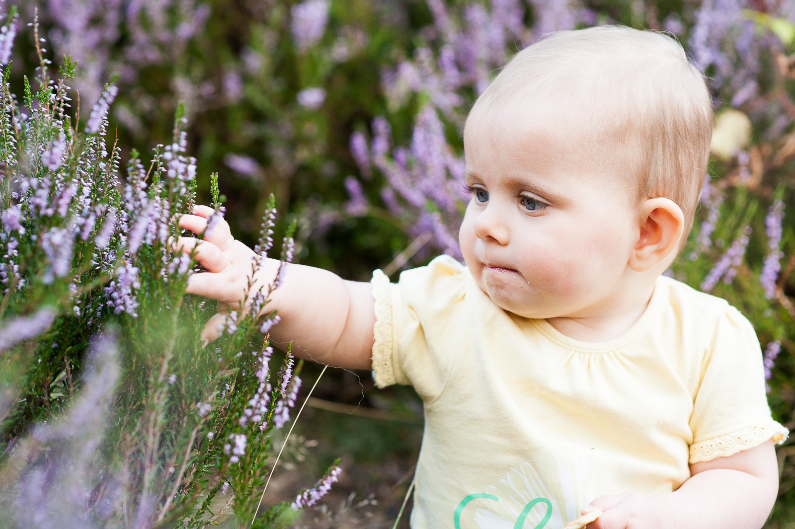 Little girl playing with lavender natural family photography